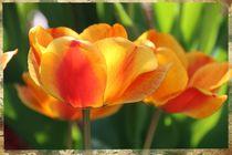 Tulpen von Ingrid Bienias
