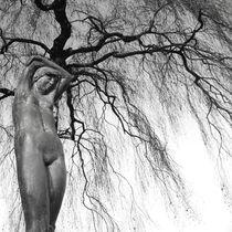 Baum des Lebens by Bastian  Kienitz