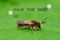 Rettet die Bienen by Claudia Evans