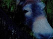 Donkey  Esel by Edgar Lück