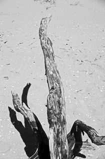 FORMBY. Driftwood On The Shore. von Lachlan Main