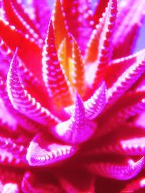 Organisches Pink by Zarahzeta ®
