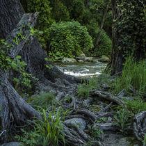 roots, trees and the river von césarmartíntovar cmtphoto