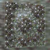 Spinning dandelion puff von feiermar