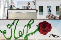 Wallflower von Armin Redöhl