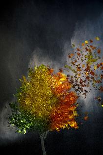 Vier Jahreszeiten von Sven Bachström
