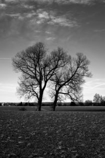Concept nature : Two tree ́s by Michael Naegele