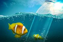 Kleiner Fisch ist im Plastikflasche gefangen von Sven Bachström