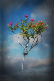 Rose Tree von CHRISTINE LAKE