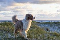 Am Hundestrand von Norddeich von Heidi Bollich