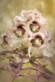 Blumenkohl by garrulus-glandarius