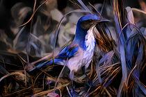 Blue Jay von Artly Studio