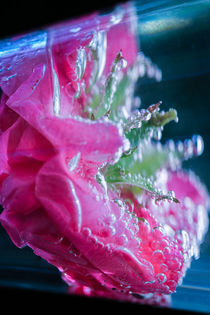Damaszener Rose Wasser Perlen  by Christine Maria Grosche