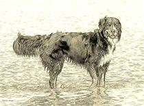 Digital Art Berner Sennenhund von kattobello