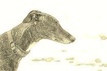 Digital Art Galgo Espaniol Profil von kattobello