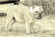 Digital Art Englische Bulldogge von kattobello