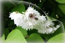 A bee on one page von feiermar