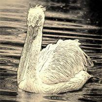 Digital Art Pelikan von kattobello