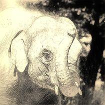Digital Art Elefant von kattobello