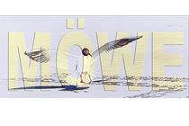 Möwe by mario-s