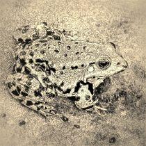Digital Art Teichfrosch von kattobello