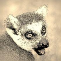 Digital Art Katta von kattobello