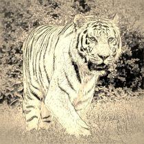 Digital Art Tiger von kattobello