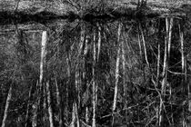 Tree Reflections by Jim Corwin