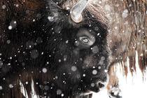 Snowy wildlife. by Tobias Otto