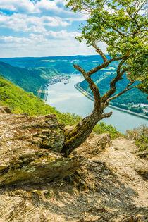 Felsmassiv am Mittelrhein 44 by Erhard Hess