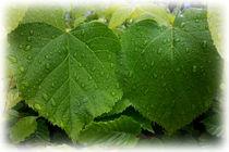 twin leaves von feiermar