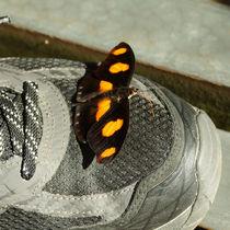 Schmetterling auf einem Schuh by Sabine Radtke