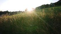Sonnenaufgang im Gras von Dario Lauper