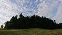 Baumgruppe mit Schäfchenwolken von Dario Lauper