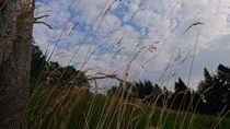 Gräserhimmel von Dario Lauper