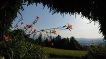 Blumen mit Aussicht von Dario Lauper