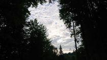 Waldlichtung mit Schäfchenwolken von Dario Lauper