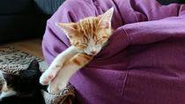 Katze im Schlaf von Dario Lauper