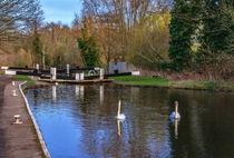 Swans At Greenham Lock von Ian Lewis