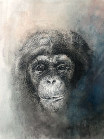 Chimp in ink and watercolour von Lyn Banks