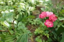 Sommerblüte von Dario Lauper