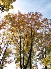Laubbäume mit typischer Blattfärbung im Herbst von Heike Rau