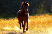 'Black Horse ' by Sandra  Vollmann