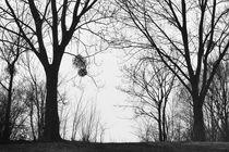 Weidensilhouette by Ralf K. Lang
