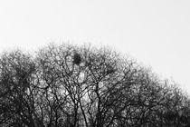 Das Nest  by Ralf K. Lang
