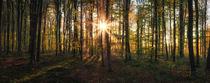 Mystischer Wald von Stephan Hockenmaier
