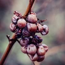 Vertrocknete Weintraube von Christian Handler