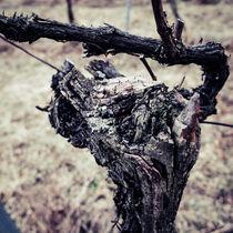 Weinstock von Christian Handler