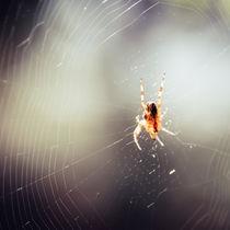 Spinne von Christian Handler