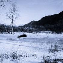 Winter im Bleistätter Moor von Christian Handler